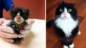 gato-pra-adoção-15