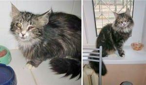 gato-pra-adoção-6