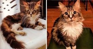 gato-pra-adoção-7