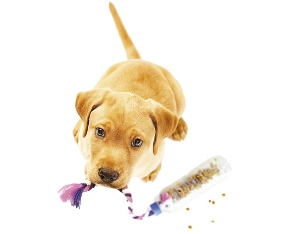 Pronto! Agora é só deixar seu cachorro se divertir com o brinquedinho!