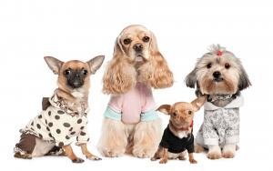 cachorro-vestido