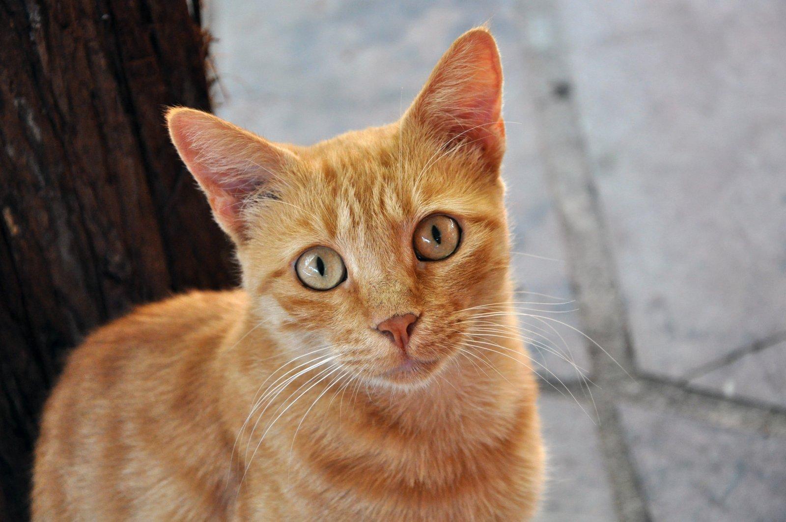 7 atitudes de um dono responsável de gato – Clínica Veterinária Vida Animal  24h – Betim